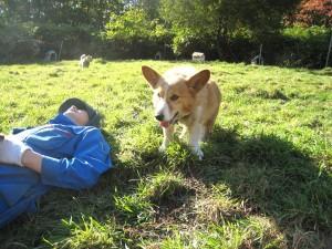 お昼寝中の牧場主のところへパッチ(コーギー)がやってきました。ミッキーマウスみたいな大きなお耳がチャームポイントですね。2009.10.10